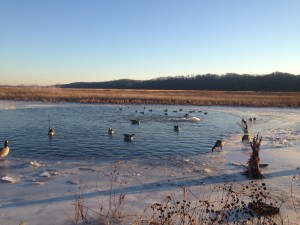Duck Hunting in Icy Conditions Require a Change in Tactics!