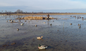 8 Decoy Strategies for Your Next Guided Duck Hunting Trip