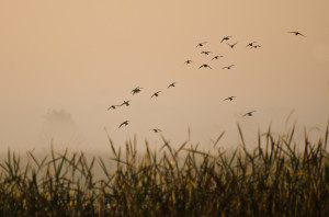 Duck Hunting in Missouri: Tips to Even the Odds
